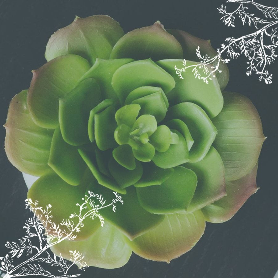 Picture of a succulent plant - Highland Health Store is a local and ethical company that cares for the environment