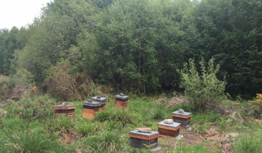 Bruce Burns Bee Hives
