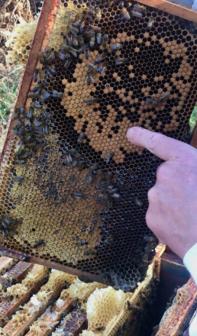 Live Honeycomb